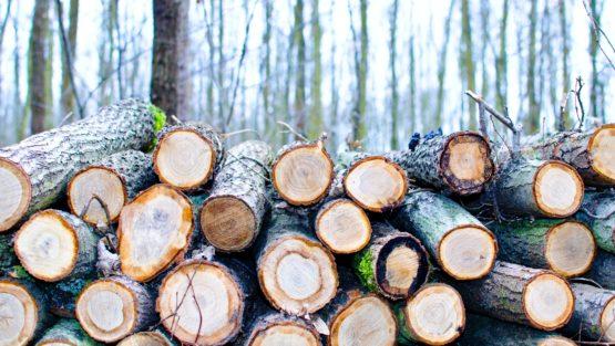 Holzverknappung gefährdet nicht nur Bauprojekte sondern ganze Existenzen im Handwerk…